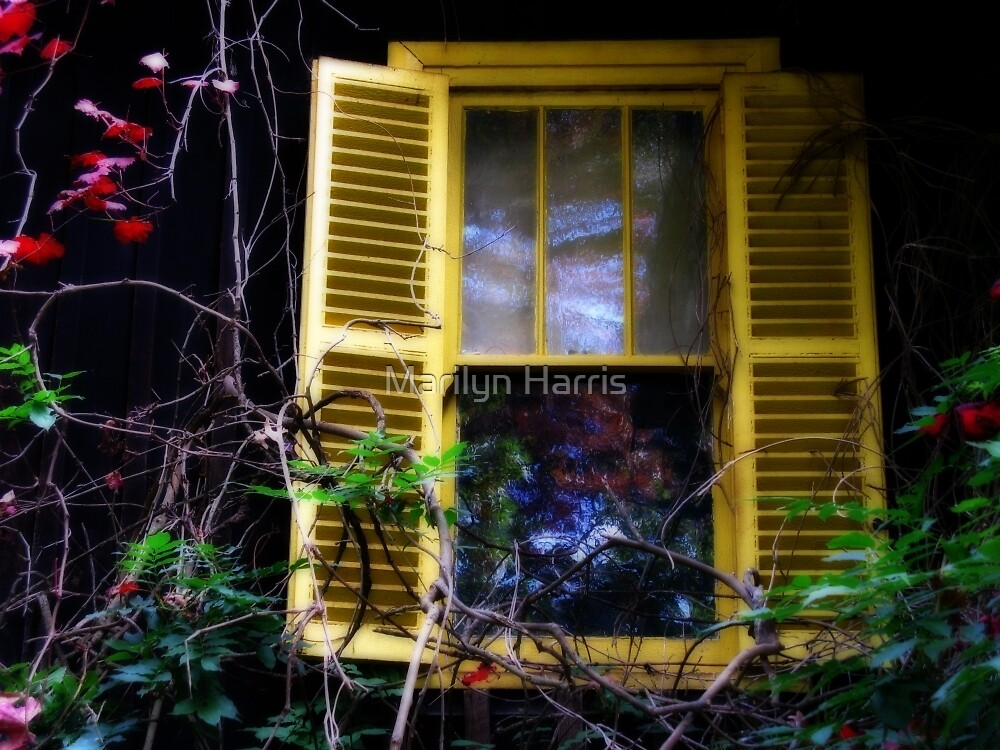 The Yellow Shutters by Marilyn Harris