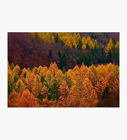 Wonder's of autumn colors  - Poloniae Alpe Besczade . by Brown Sugar - Mr.Medicine . F** Favs  (8) . Views (460) ). Thank you a bunch friends !    Photographic Print