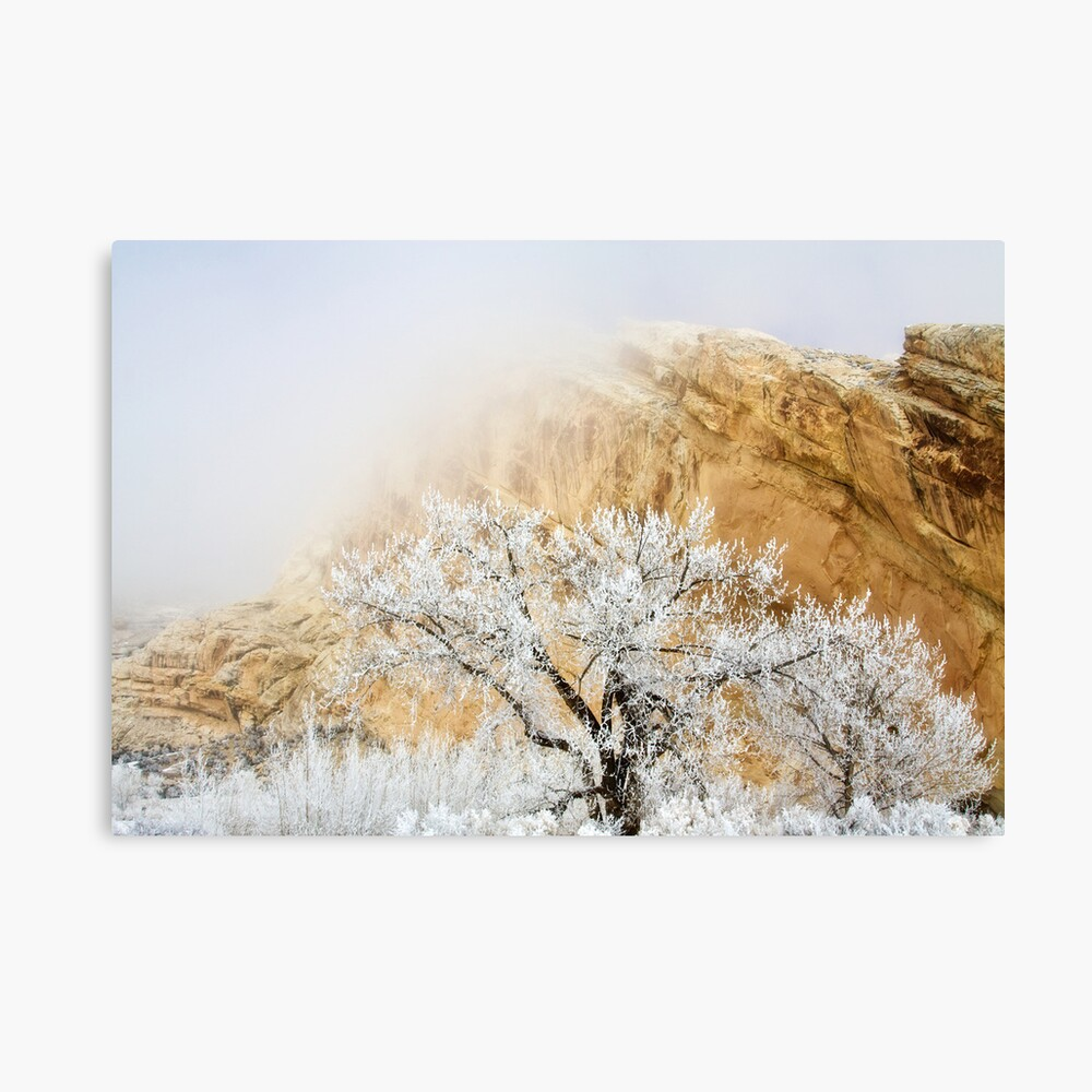 Magic Frost Canvas Print