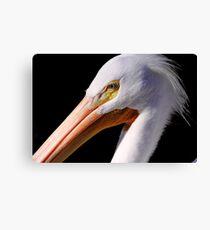 White Pelican Portrait Canvas Print