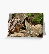 Chipmunk at His Home Greeting Card