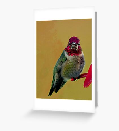ANNAS HUMMINGBIRD..WINTER BIRD SERIES Greeting Card