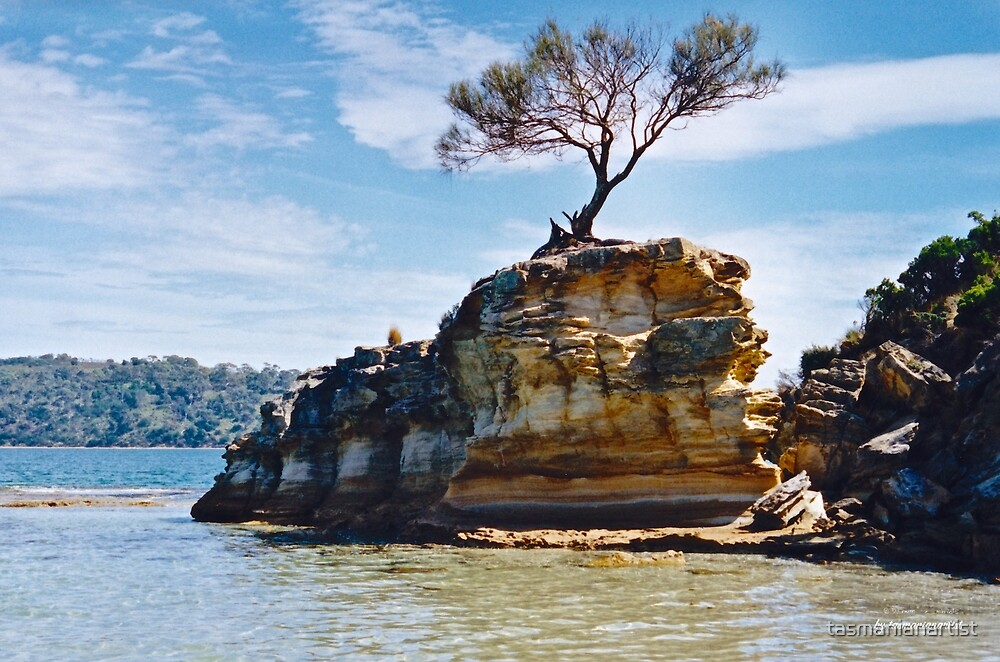 TASMAN PENINSULA ~ Lagoon Beach - Tree on Rock by tasmanianartist by tasmanianartist