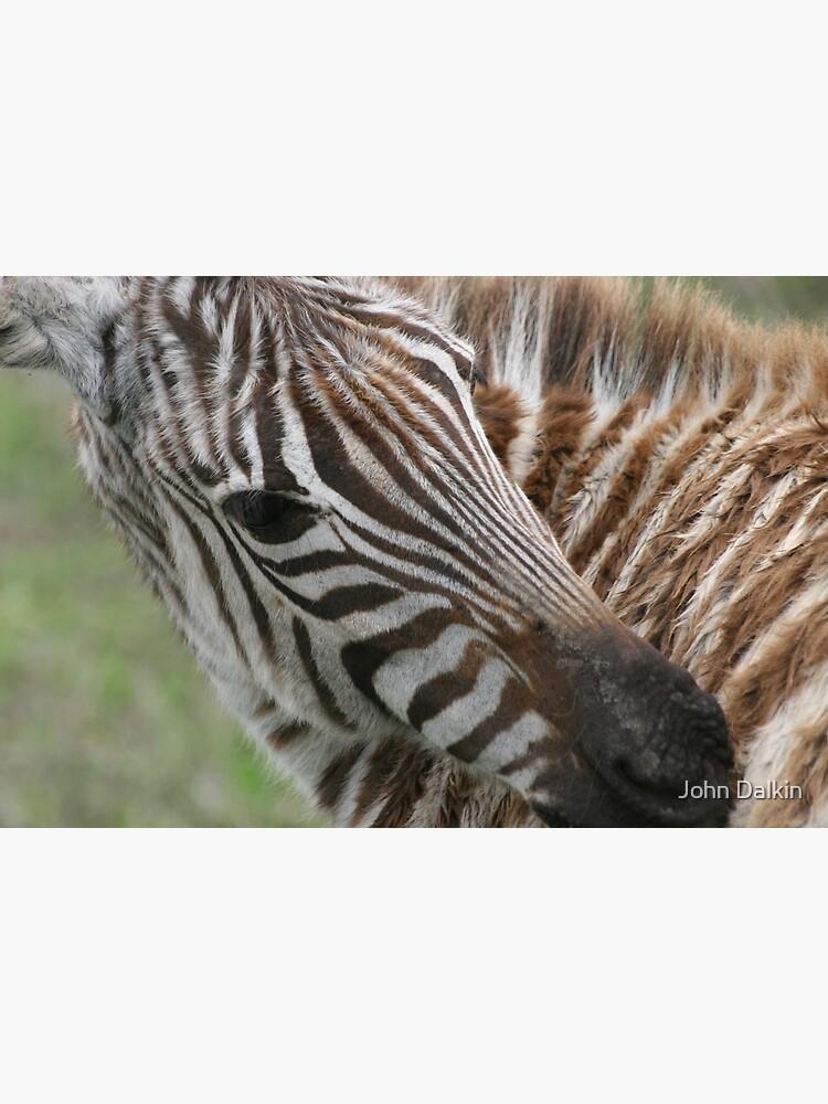 Zebra`s Stripes by JohnDalkin