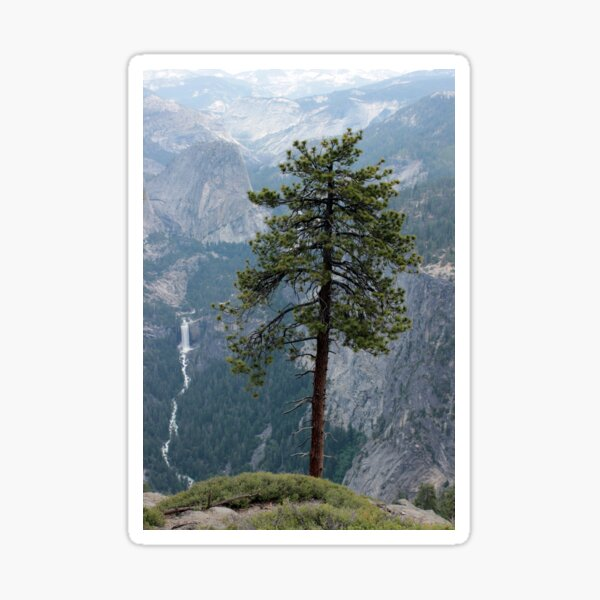 Pine overlooking Ahwahnee Sticker