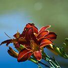 A Flower by Michael Walker