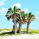 Florida Palm Trees by Scott Hayes