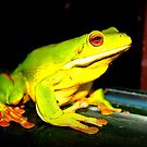 Giant Green Tree  Frog by Cathie Trimble