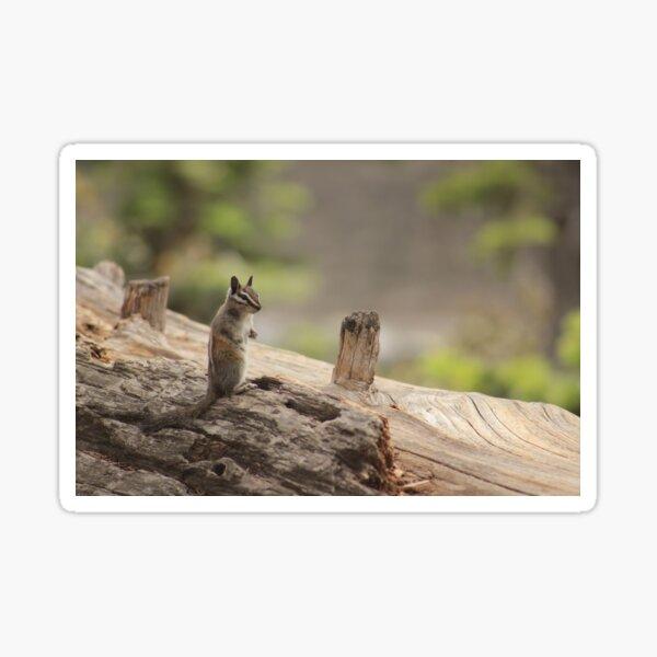 Yosemite chipmunk Sticker
