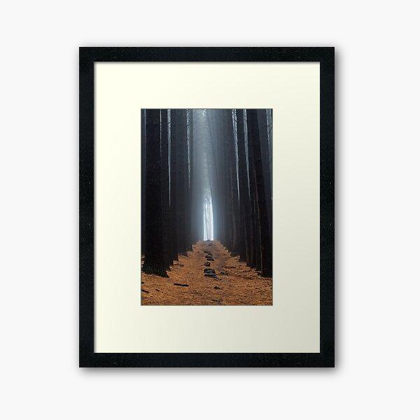 Sugar Pine Walk 1 Framed Art Print