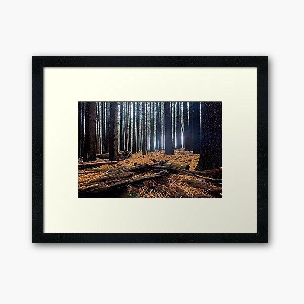 Sugar Pine Walk 2 Framed Art Print