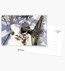 Caught in action Postcards