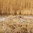 Grey Heron and Pike by kernuak