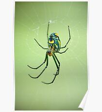 Venusta Orchard Spider Poster