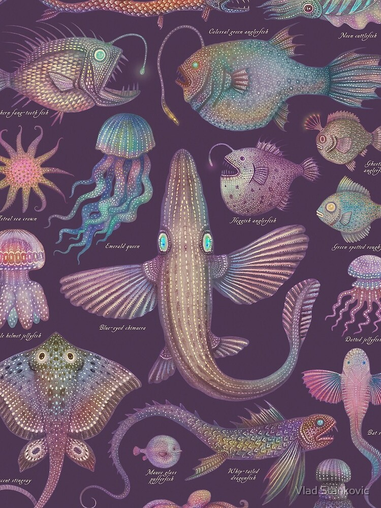 Sea life specimens III by vladimirsart