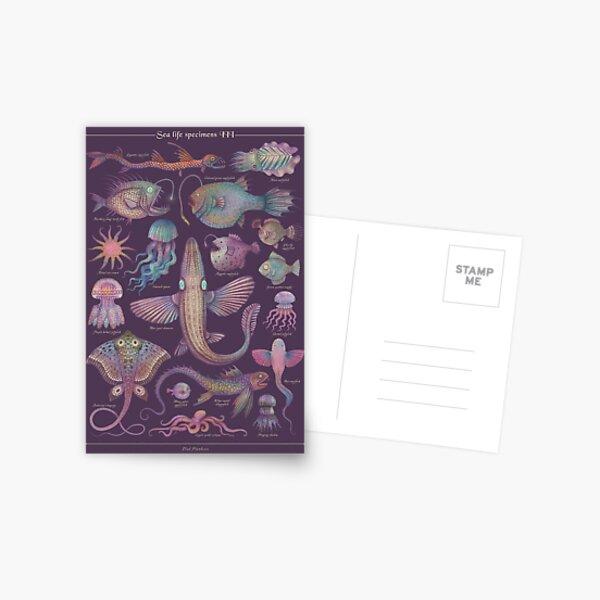 Sea life specimens III Postcard