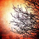 Red and Dead Branches by Annabelle Ward