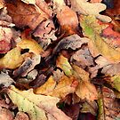 Autumn Leaves. by Annabelle Ward