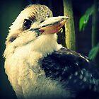 Kookaburra  by Kate Towers IPA