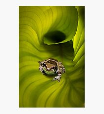 Escaping the Hosta Photographic Print