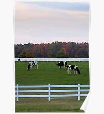 Autumn Cows Poster