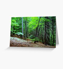 Magical Woods in Transylvania Greeting Card