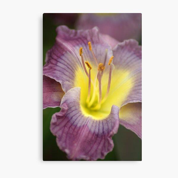 Purple N Yellow Lily Metal Print