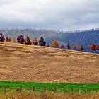Autumn Rank II by Harry Oldmeadow