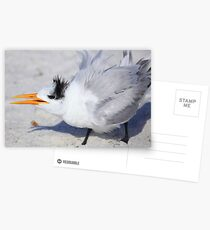 Tern Talk Postcards