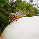 Patient Cicada by Sharlene Gray