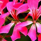 Ribbons of Pink ! by Elfriede Fulda