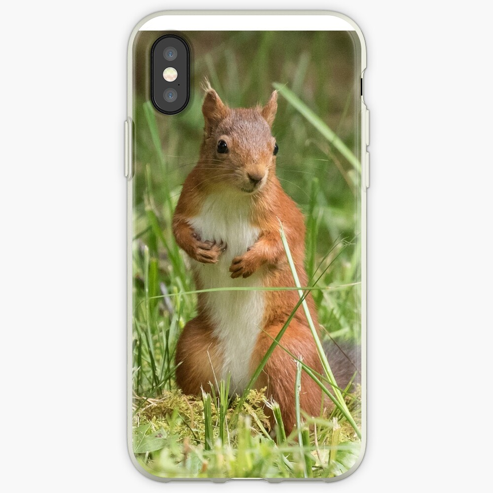 Squirrel in the grass iPhone Case & Cover