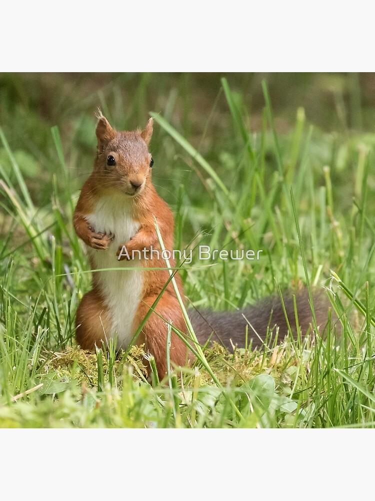 Squirrel in the grass by dailyanimals