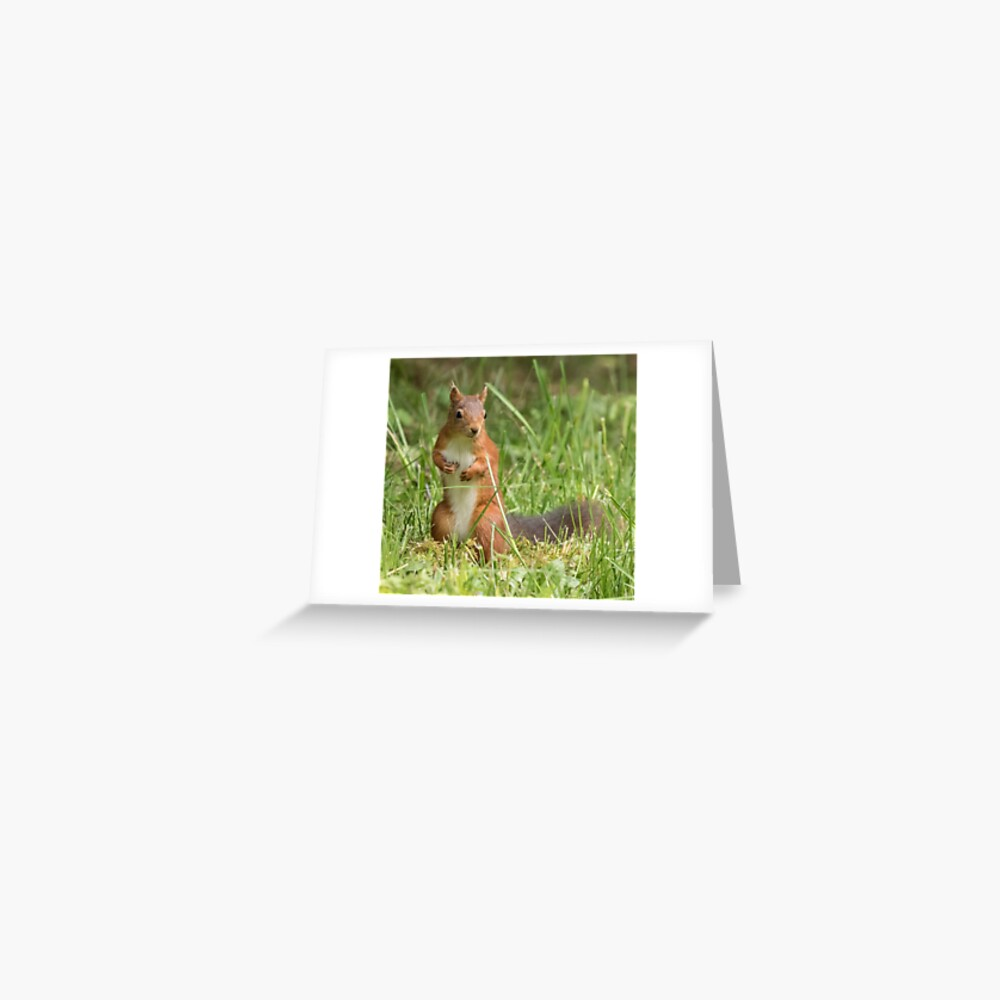 Squirrel in the grass Greeting Card