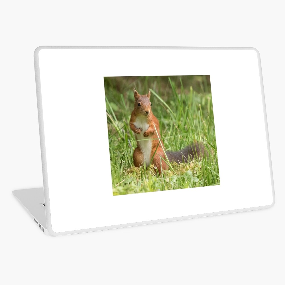 Squirrel in the grass Laptop Skin