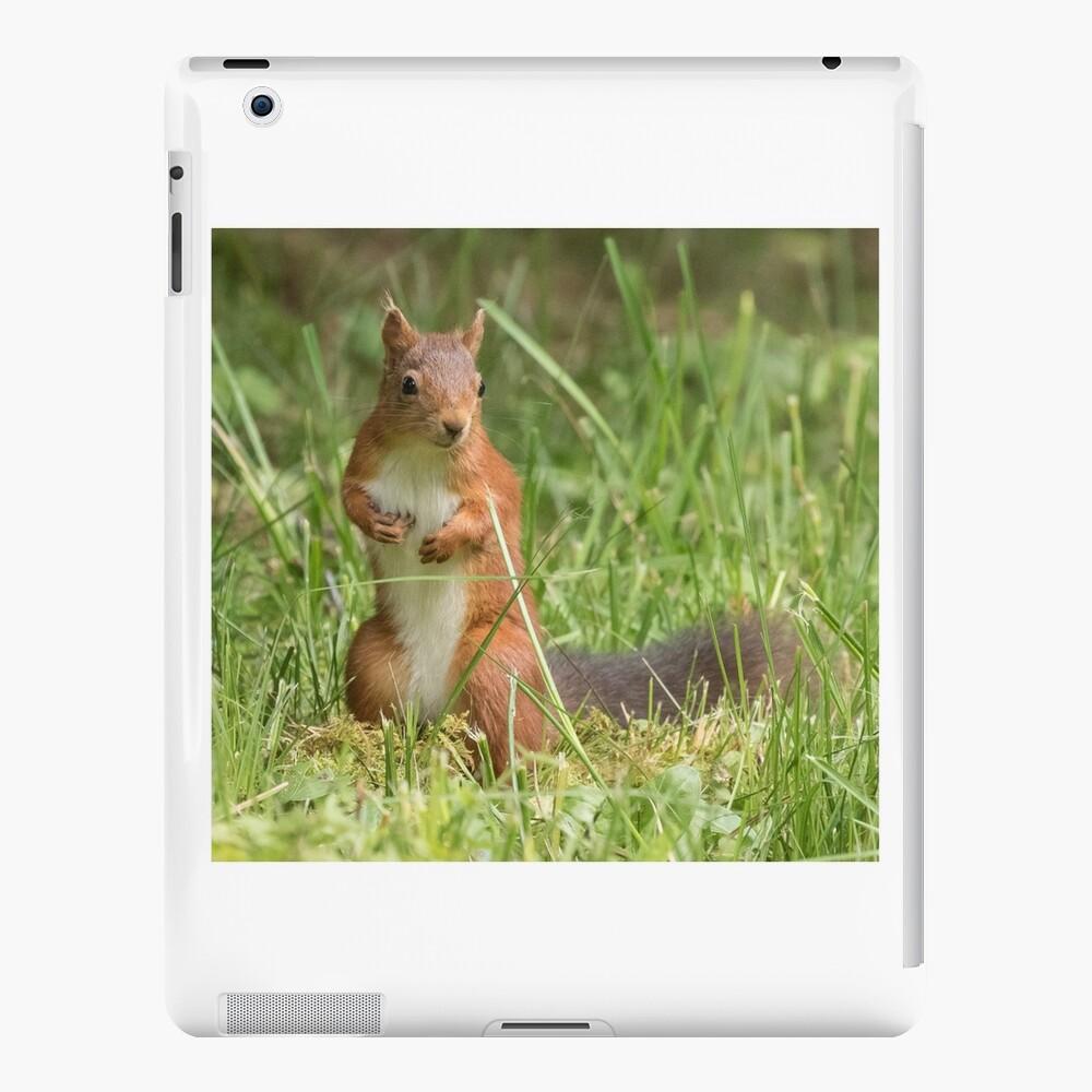 Squirrel in the grass iPad Case & Skin