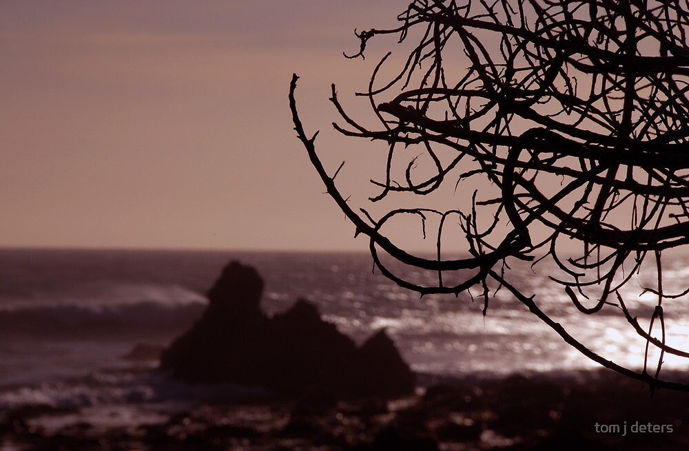 Tree Silhouette at Sunset by Tom Deters