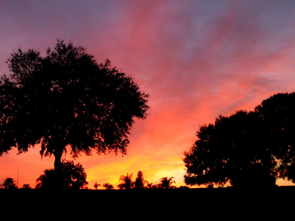 Sunset ~ Jan. 12, 2011, Davenport, FL by Debbie Robbins