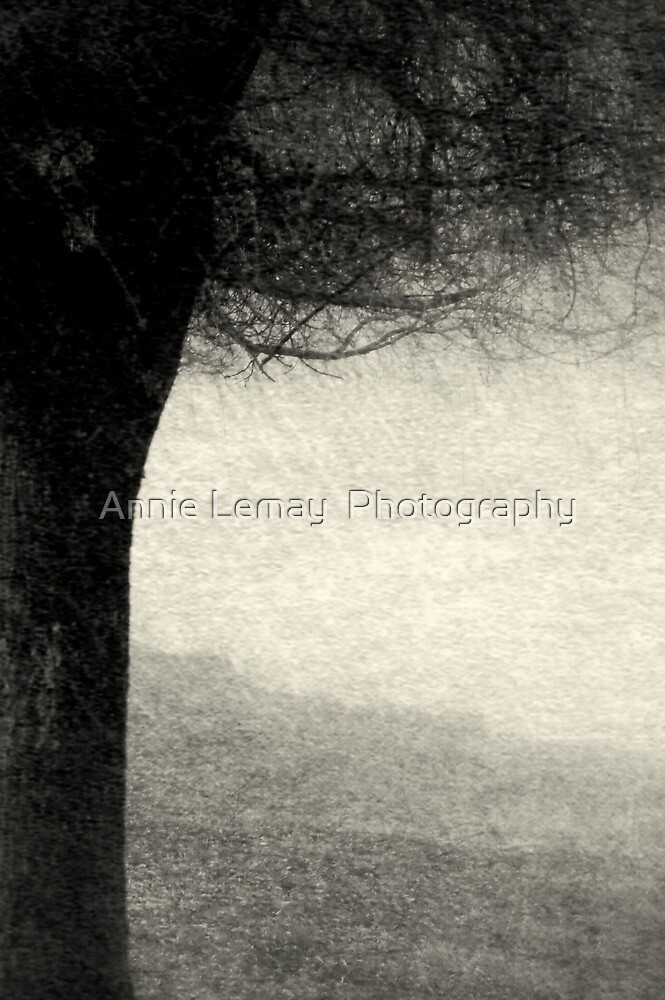 Shade by Annie Lemay  Photography