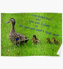 Feature Banner - All Creatures Great & Small Group Poster