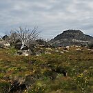 The Hump, Mount Buffalo by Colin12