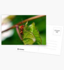 Soldier Beetle Postcards