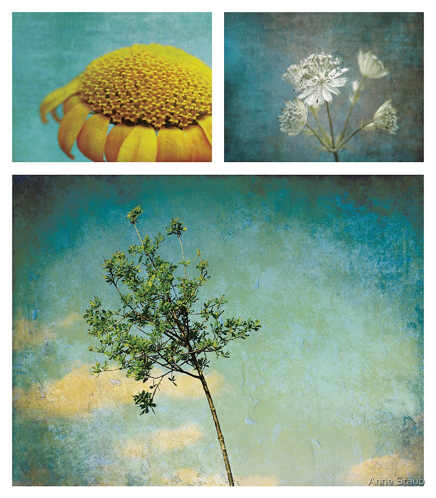 Collection ~ Nature in colour by Anne Staub