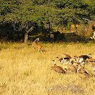 cheetah vs vultures.... by MacLeod
