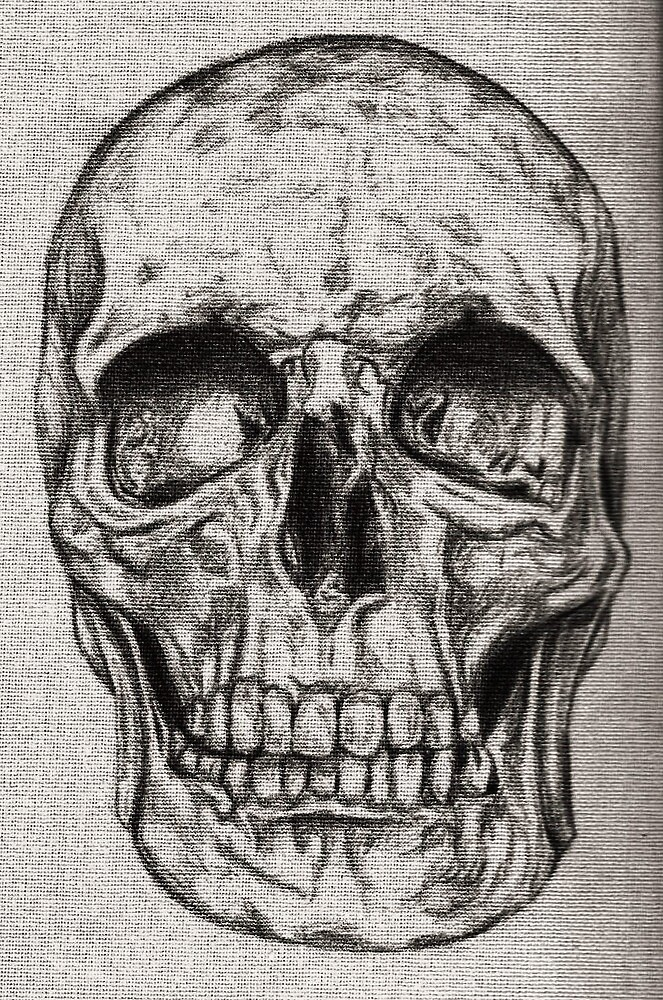 Skull  by EllieKD