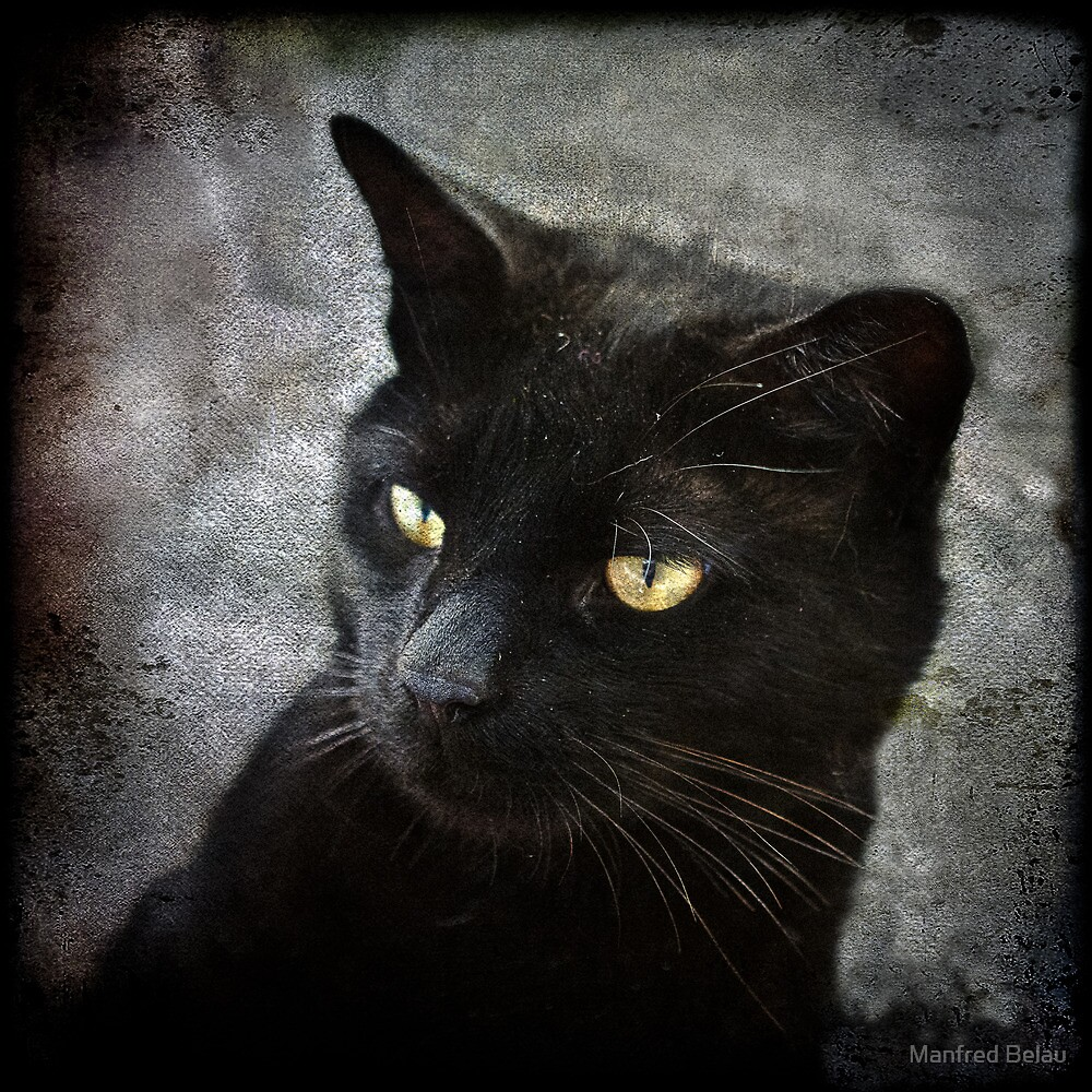 Black Cat with yellow Eyes  by Manfred Belau