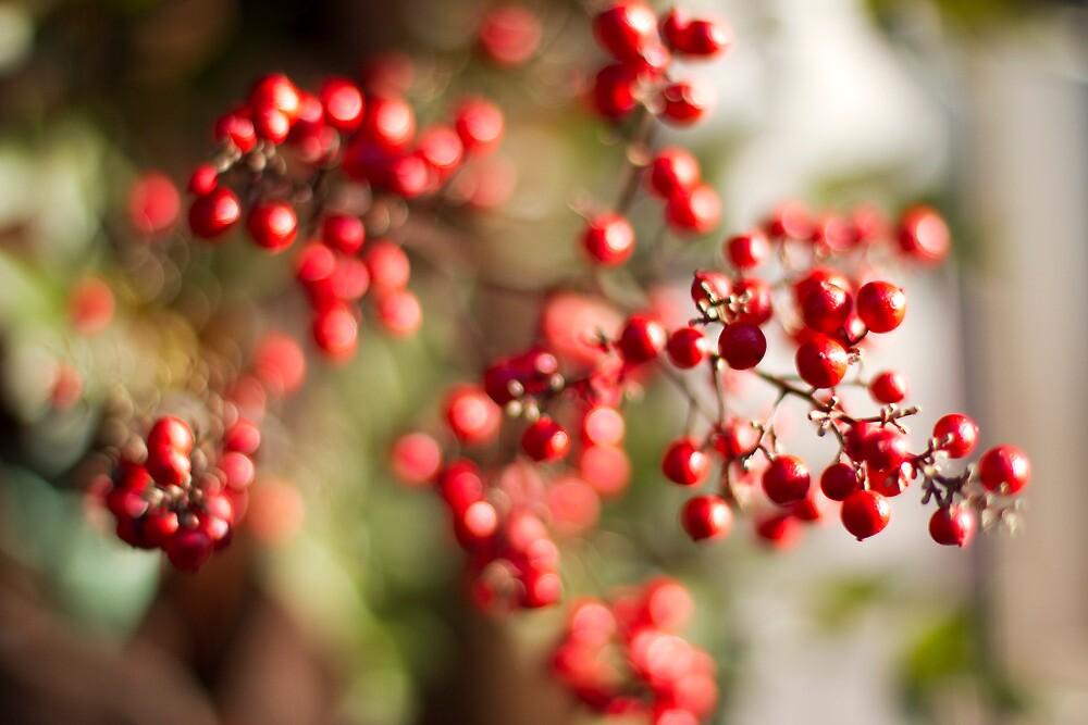 Berry red by Sam Ryan