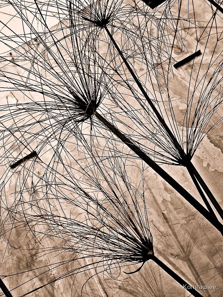 Grass by Kornrawiee