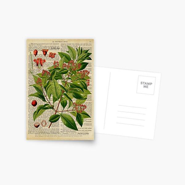 Botanical print, on old book page Postcard