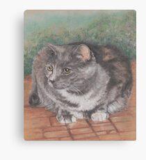 Precious Cat Canvas Print